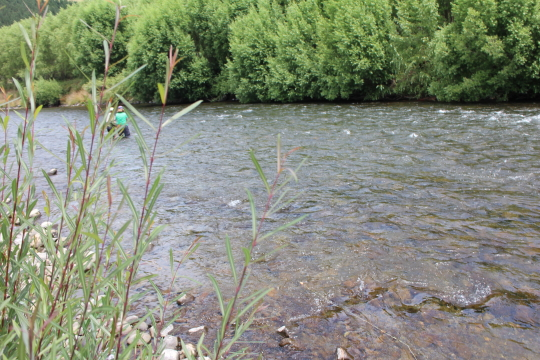 A couple of beginners fly fishing in new zealand four for Beginning fly fishing