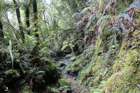 The Demon Trail, Hollyford Track
