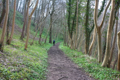 A walk in the woods, Cotswold Way