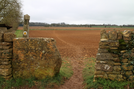 Cotswold Way - crossing field