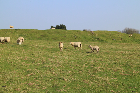 Hill Fort, Cotswold Way