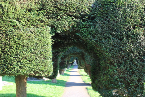 Yew trees, Painswick, Cotswold Way