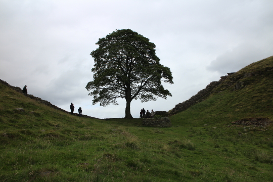 Sycamore Gap Tree, Hadrian's Wall Path