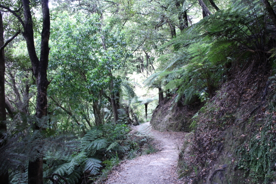Easy track for walkers but watch the drop on the corners for mountain bikers
