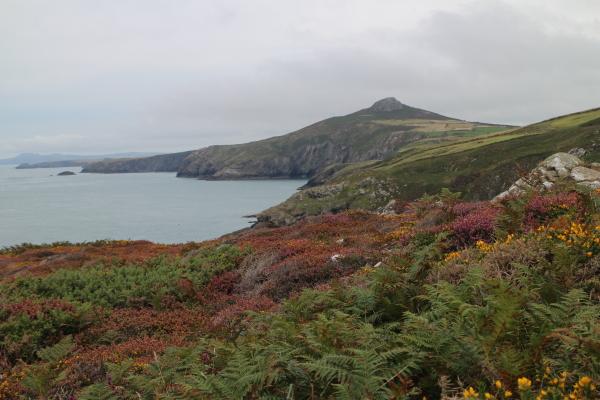 Flora on the Pembrokeshire Coastal Path