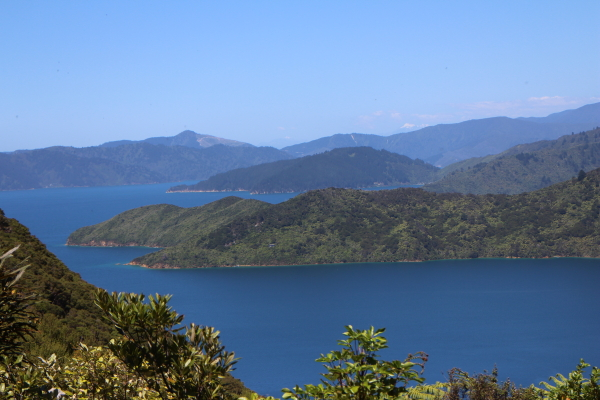 View from lookout above Ship Cove, Queen Charlotte Track