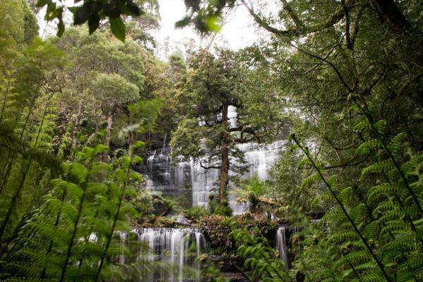 Russell Falls, Mt Field, Tasmania