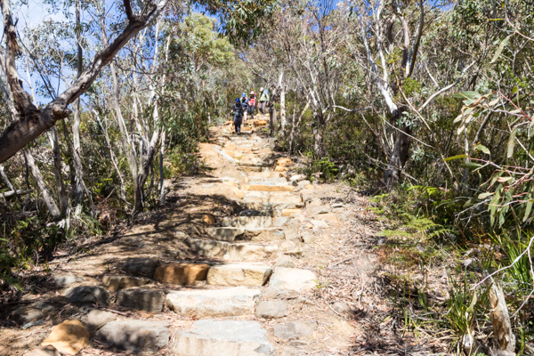Heading down stairs, Three Capes Track